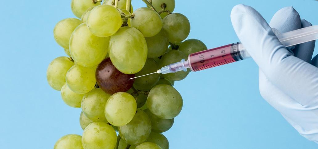 Modifikovanje hrane GMO