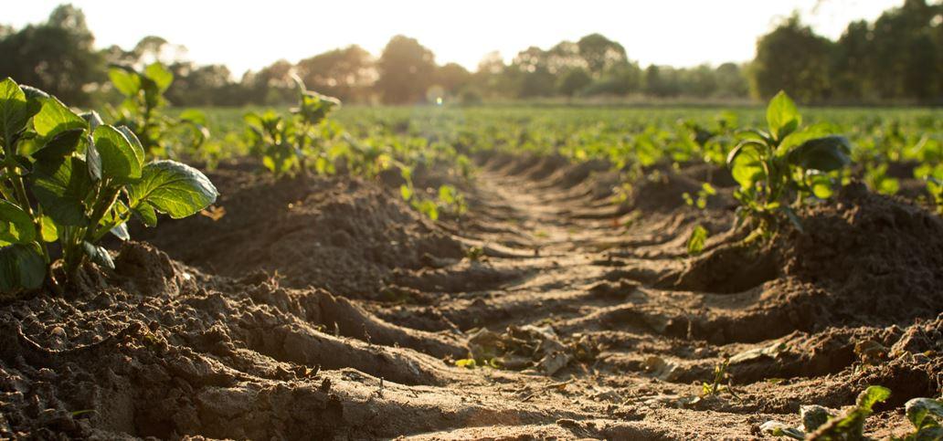 Plodno zemljište